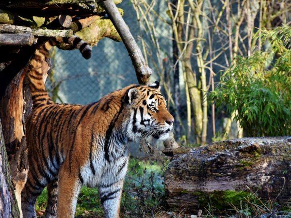 leukste dierentuinen van nederland