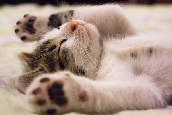 Kattenharen kleding