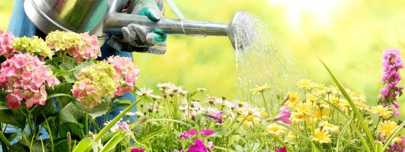 Houd je tuin in topconditie in de maand augustus!